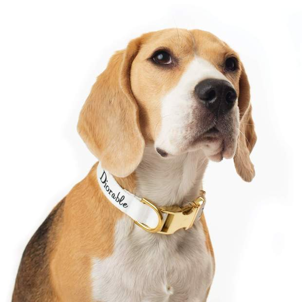 Dog Collars - The DIORable Premium Dog Collar