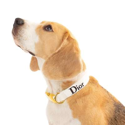 Dog Collars - The DiorDog Designer Inspired Dog Collar