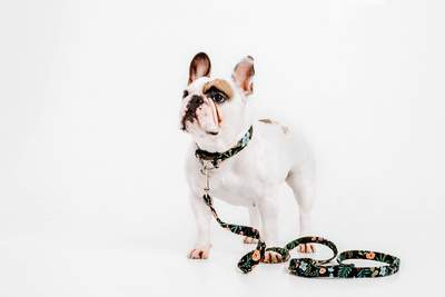 Dog Collars - Walk It Out! - Custom VRBH Matching Leash