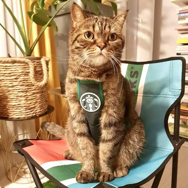 StarBarks Barista Apron for Small Dogs and Cats