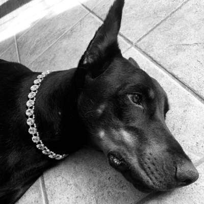 "Pet Collars - Sparkling Crystal Rhinestone Pet Collar Necklace - ""The Diana"""