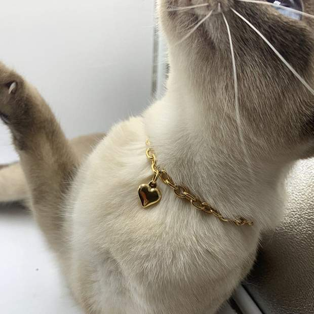 Pet Jewelry - Gold Heart Charm Cat Necklace