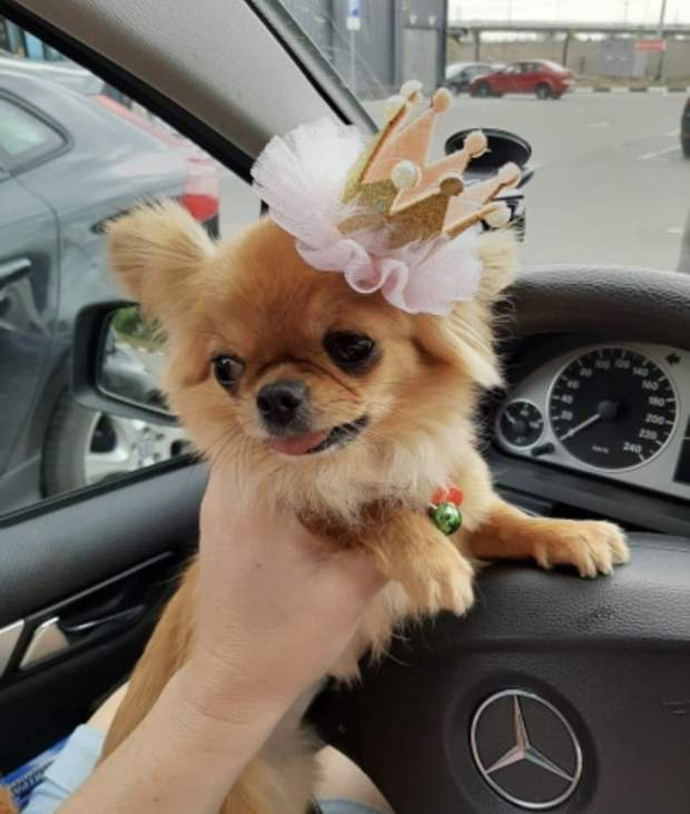 Pet Lifestyle - Princess Crown Pet Costume Hair Clip