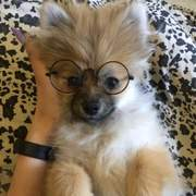 Pet Lifestyle - Vintage Pet Round Wire Frame Glasses